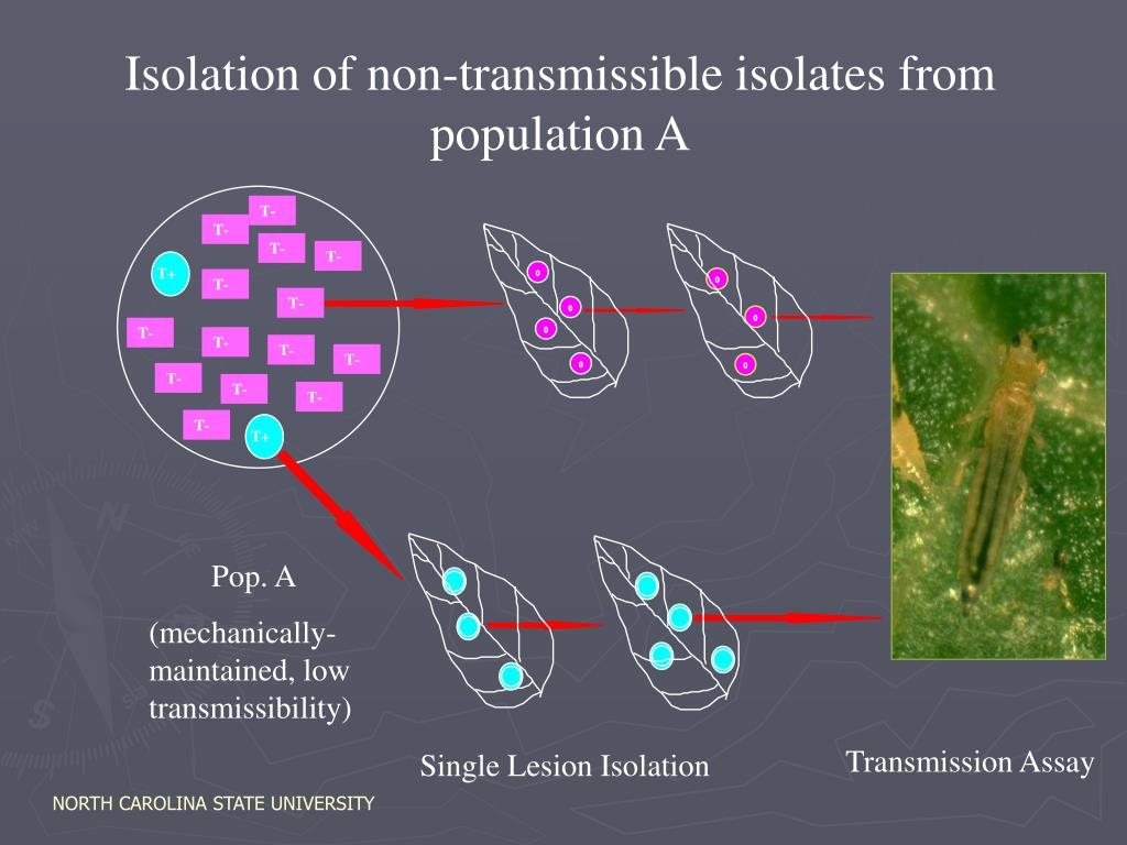 Isolation of non-transmissible isolates from population A