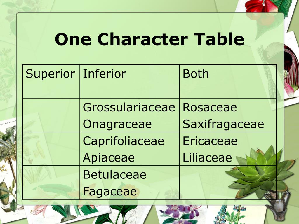 One Character Table