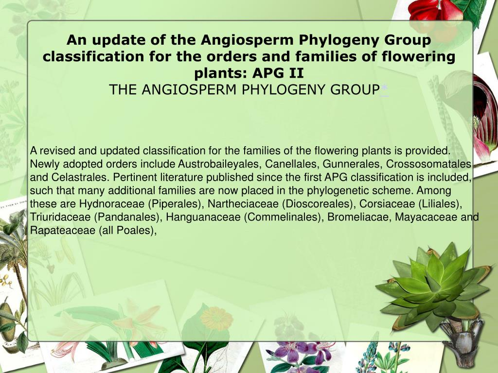 An update of the Angiosperm Phylogeny Group classification for the orders and families of flowering plants: APG II