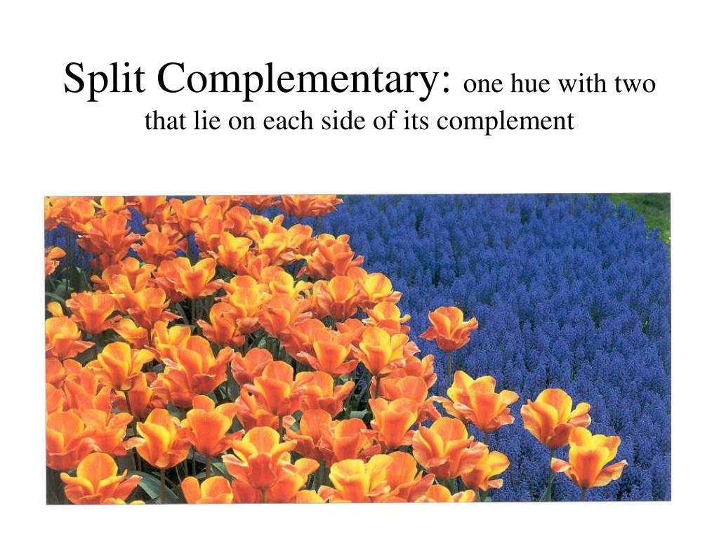 Split Complementary:
