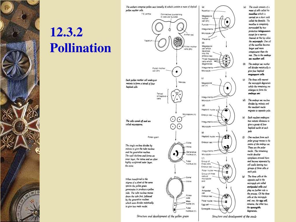 12.3.2 Pollination