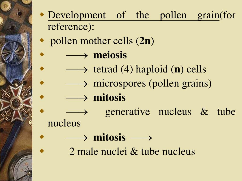 Development of the pollen grain