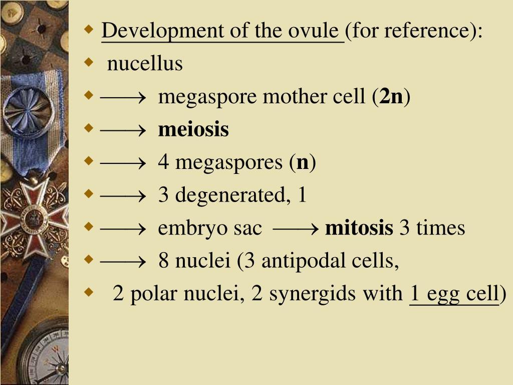 Development of the ovule