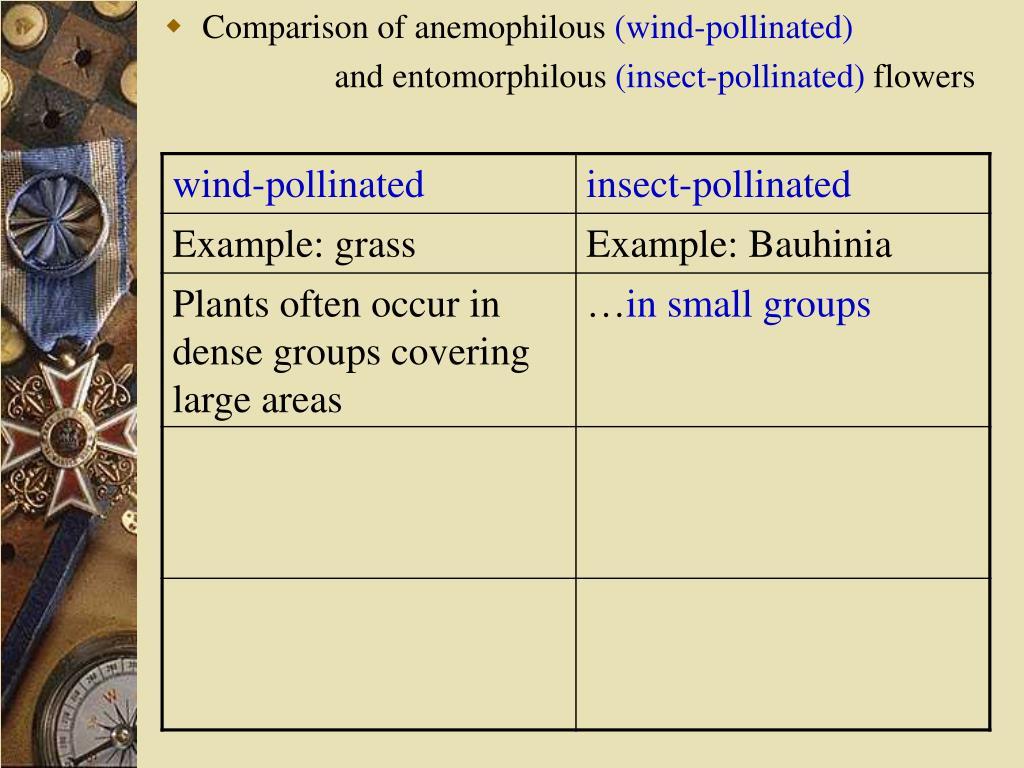 Comparison of anemophilous