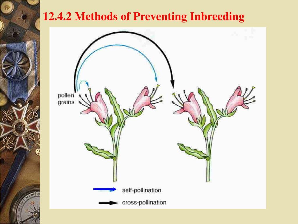 12.4.2 Methods of Preventing Inbreeding