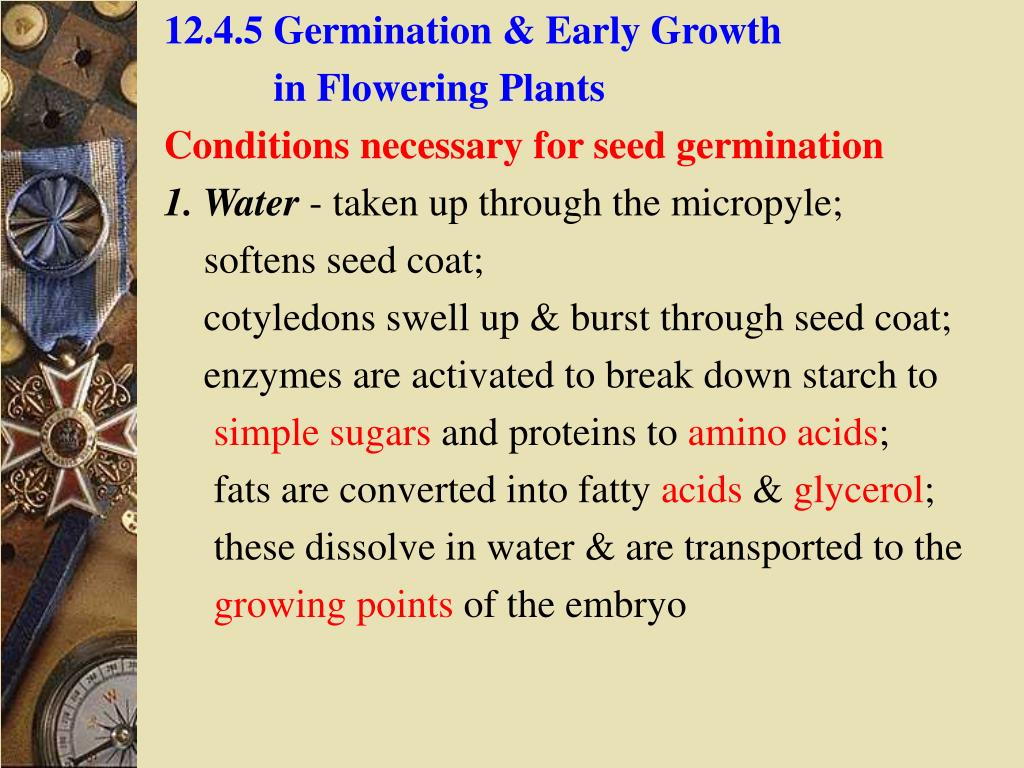 12.4.5 Germination & Early Growth