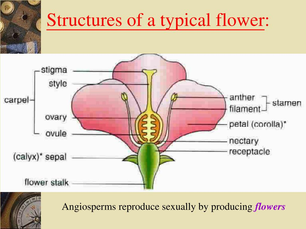 Structures of a typical flower