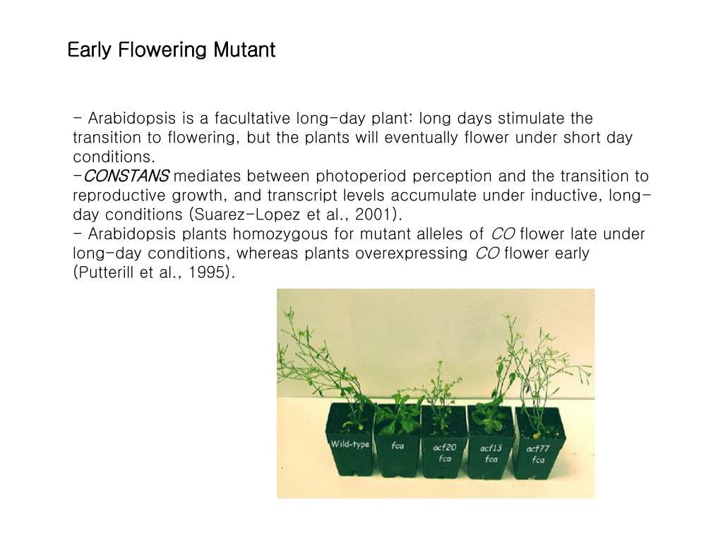Early Flowering Mutant