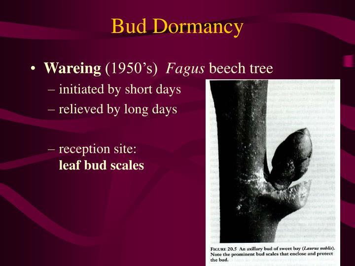 Bud Dormancy