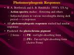 photomorphogenic responses2