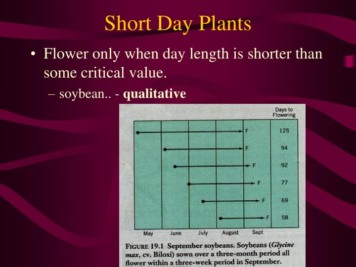 Short Day Plants