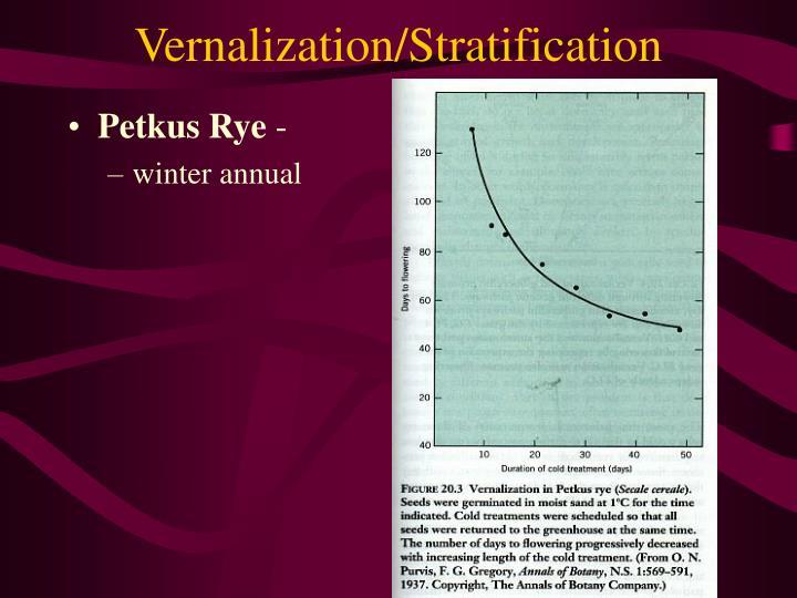 Vernalization/Stratification