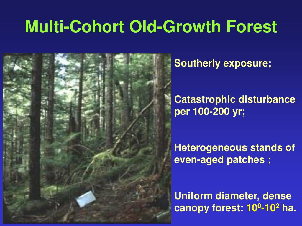 Multi-Cohort Old-Growth Forest