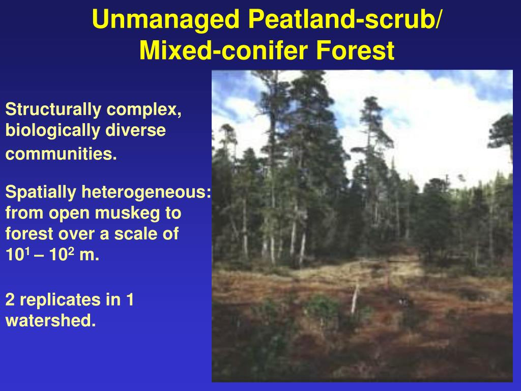 Unmanaged Peatland-scrub/ Mixed-conifer Forest