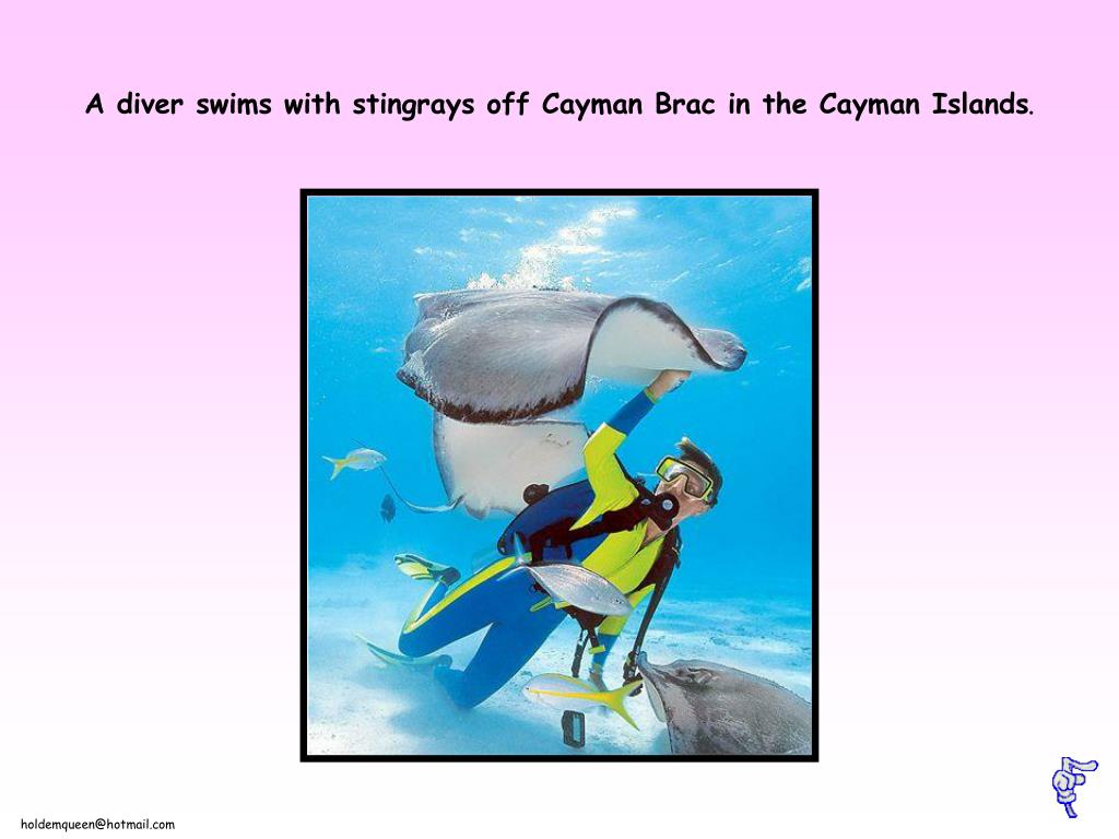 A diver swims with stingrays off Cayman Brac in the Cayman Islands