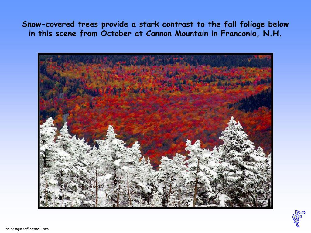 Snow-covered trees provide a stark contrast to the fall foliage below in this scene from October at Cannon Mountain in Franconia, N.H.