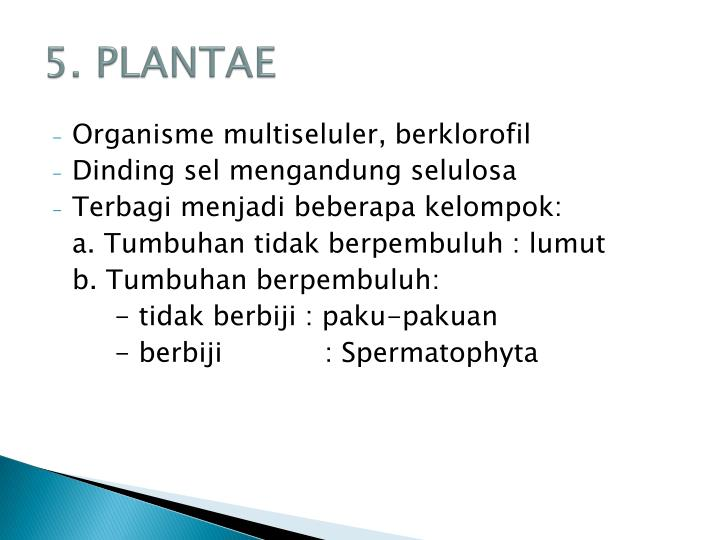 5. PLANTAE