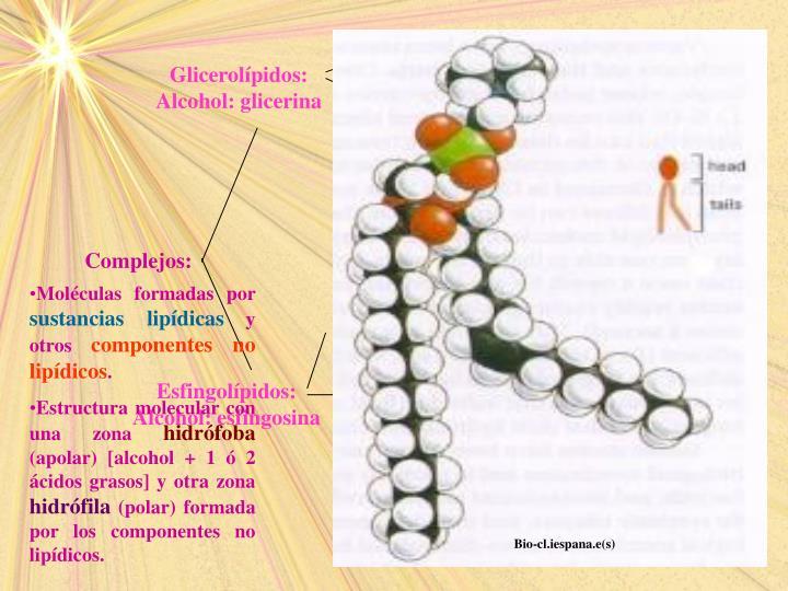 Gliceroglucolípidos: