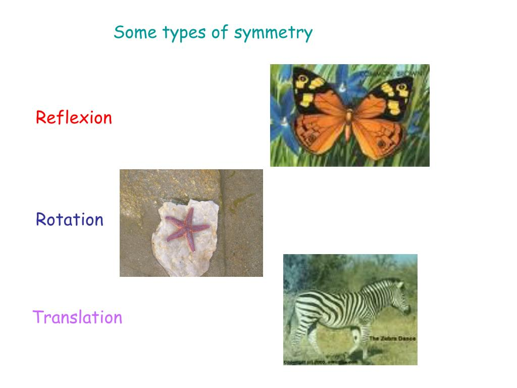 Some types of symmetry