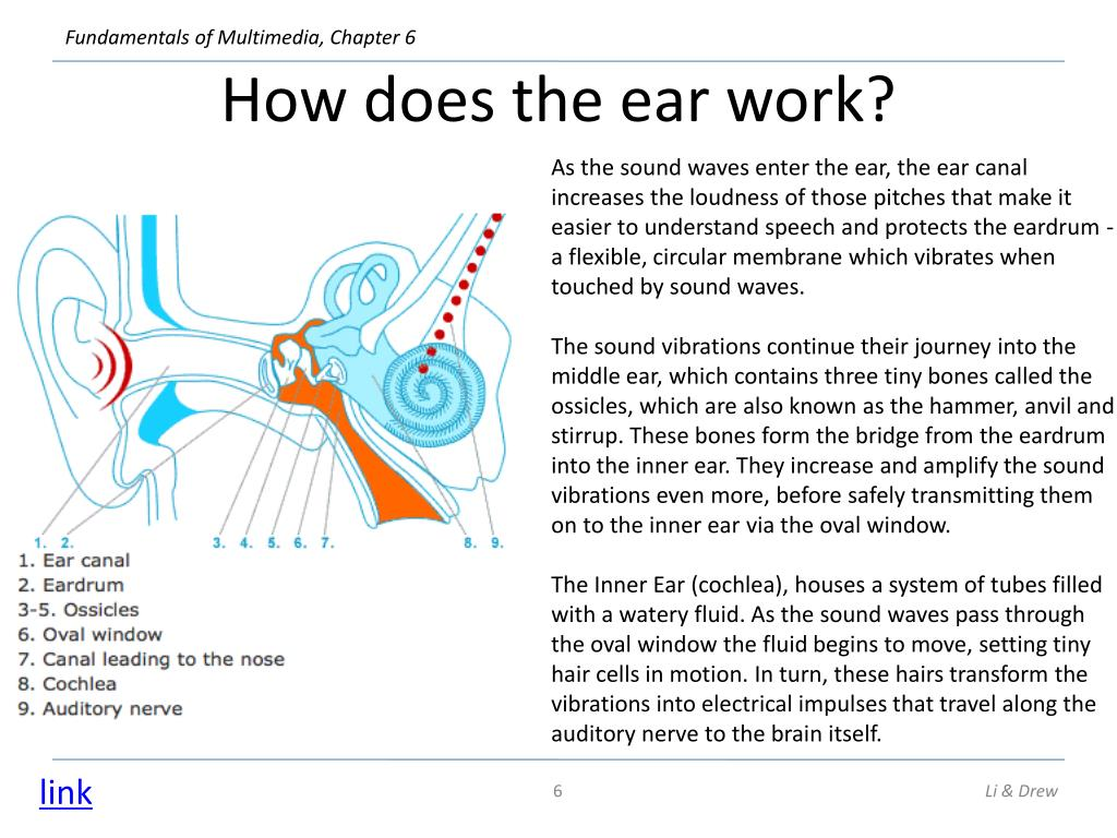 How does the ear work?