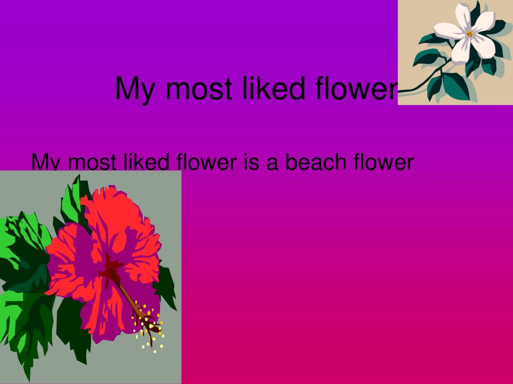My most liked flower