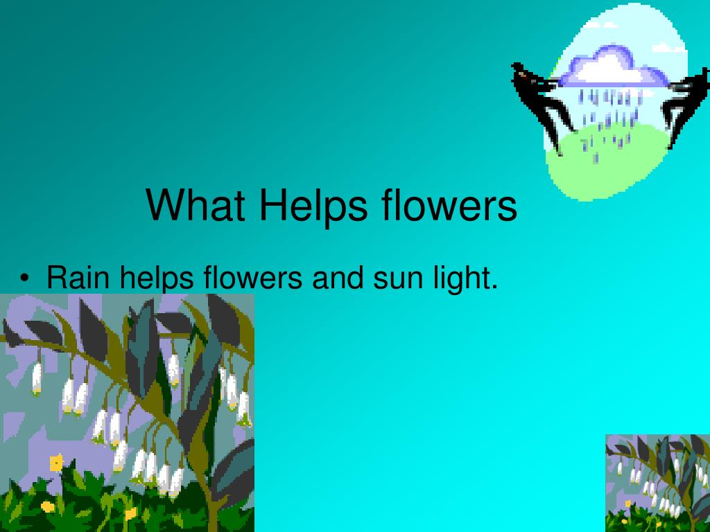What Helps flowers
