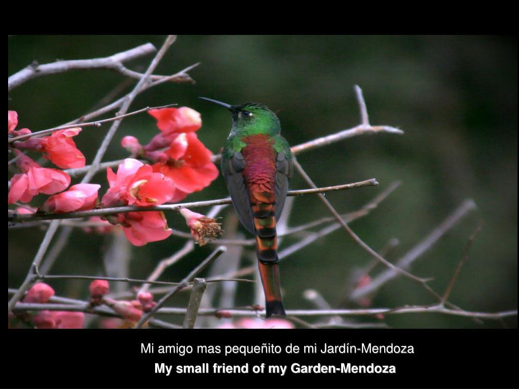 Mi amigo mas pequeñito de mi Jardín-Mendoza