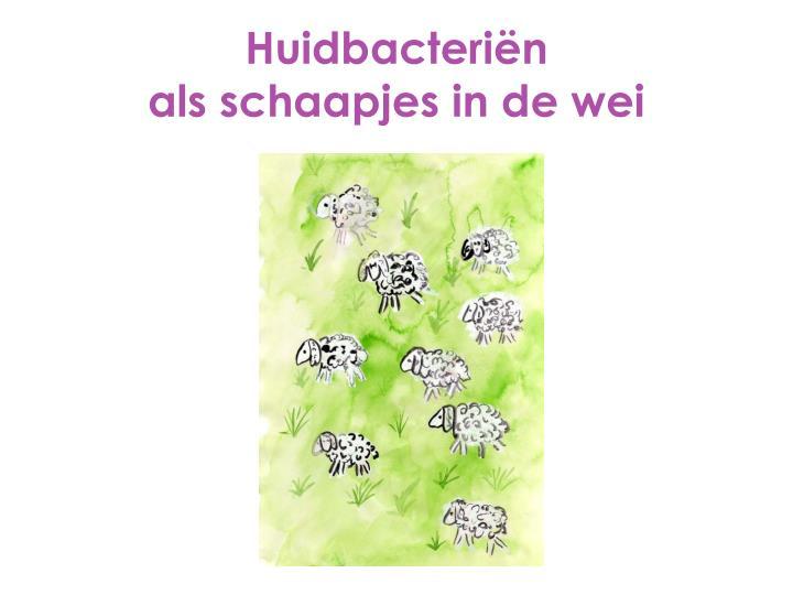 Huidbacteriën