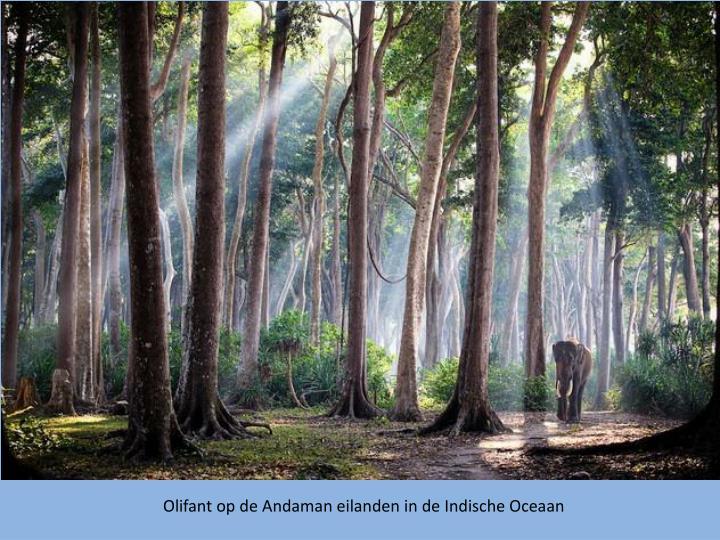 Olifant op de Andaman eilanden in de Indische Oceaan