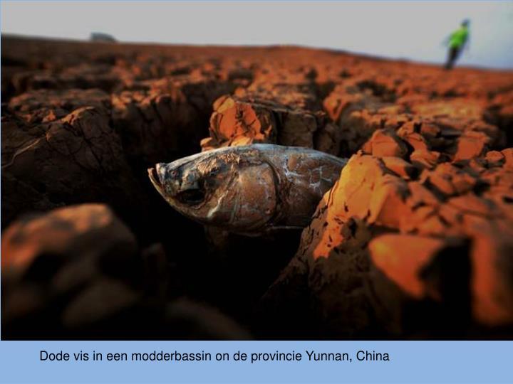 Dode vis in een modderbassin on de provincie Yunnan, China