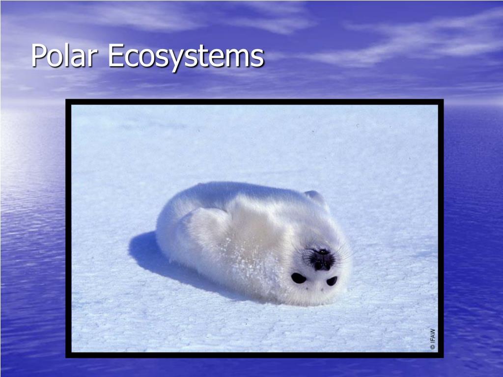 Polar Ecosystems