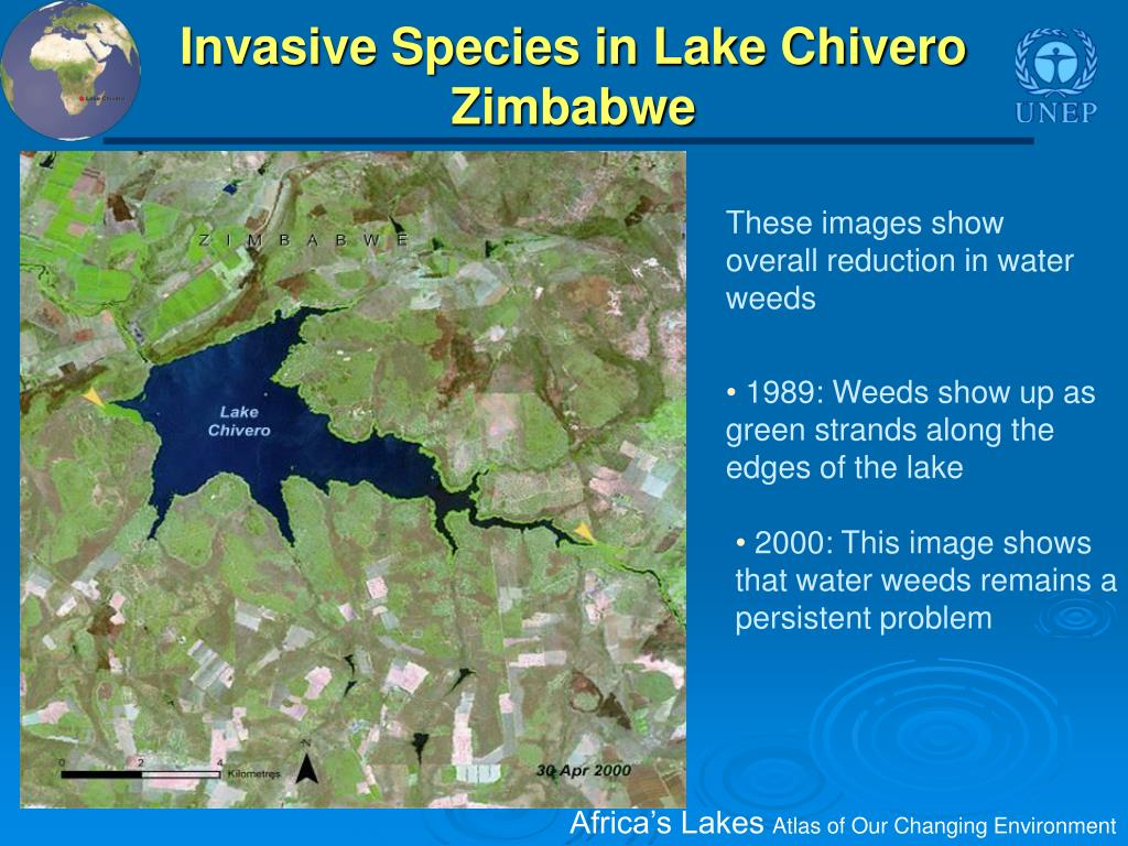 Invasive Species in Lake Chivero Zimbabwe