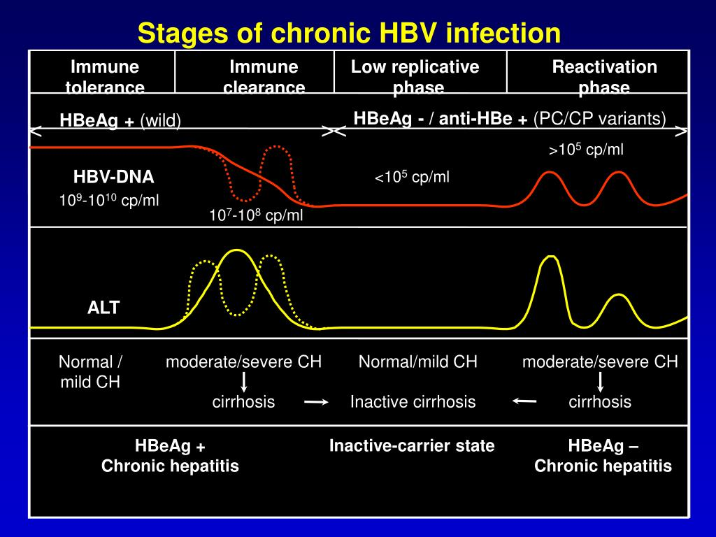 Stages of chronic HBV infection