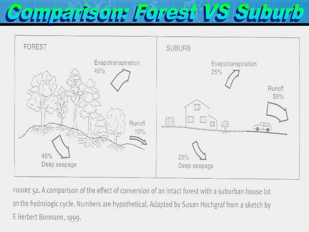 Comparison: Forest VS Suburb