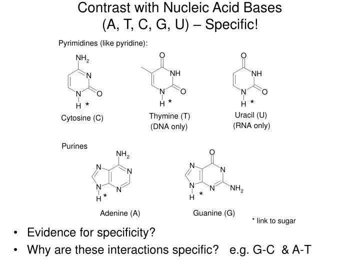Contrast with Nucleic Acid Bases
