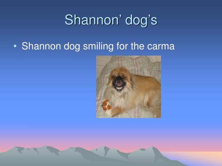Shannon' dog's