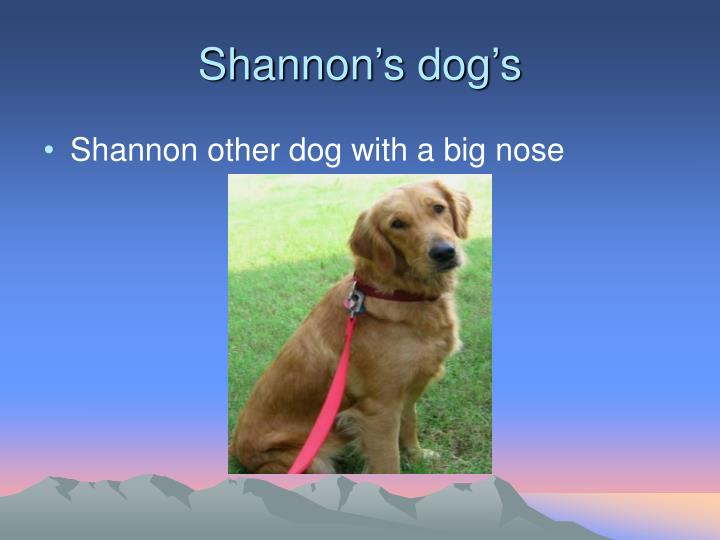 Shannon's dog's