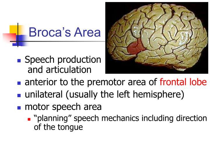 Broca's Area