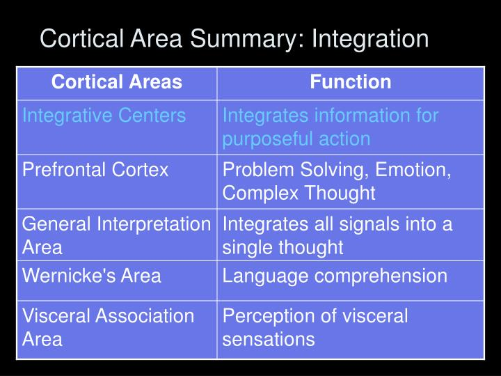 Cortical Area Summary: Integration