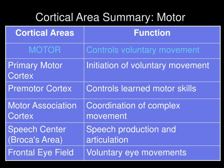 Cortical Area Summary: Motor