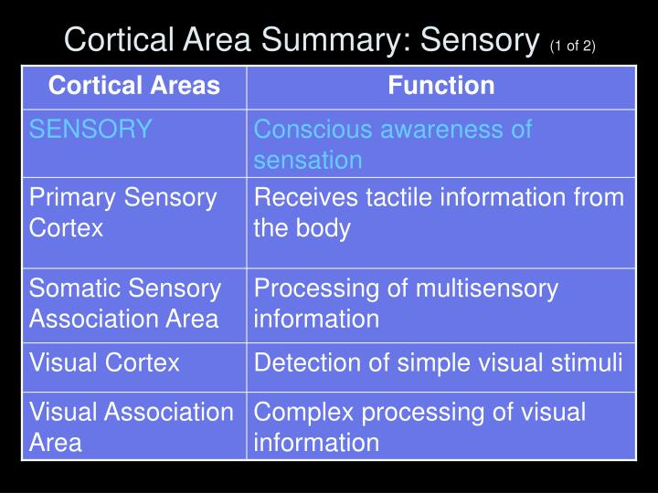 Cortical Area Summary: Sensory
