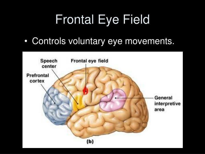 Frontal Eye Field
