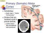 primary somatic motor cortex1