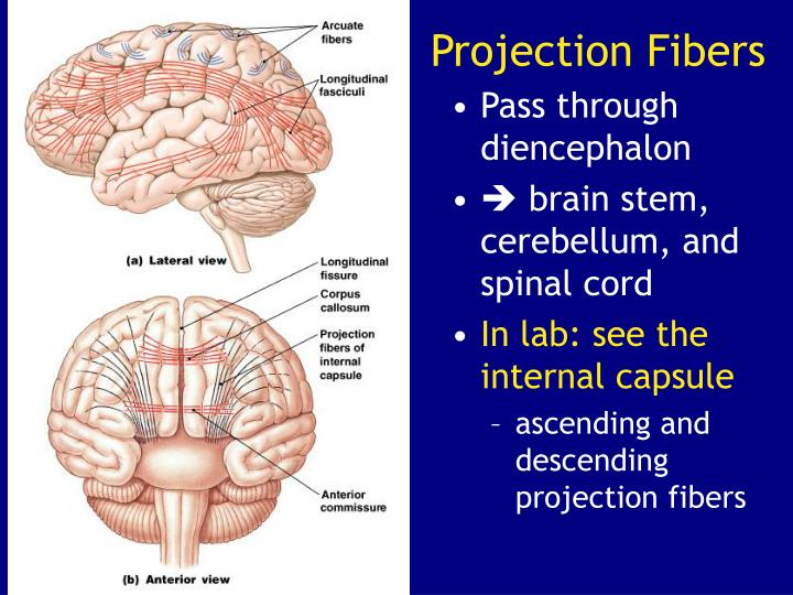 Projection Fibers