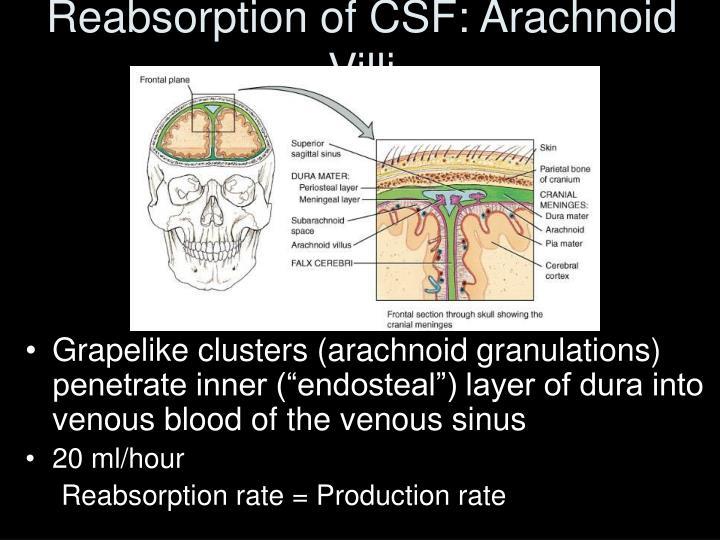 Reabsorption of CSF: Arachnoid Villi