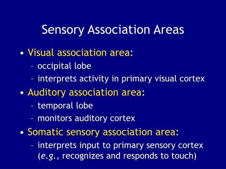 Sensory Association Areas