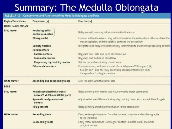 Summary: The Medulla Oblongata