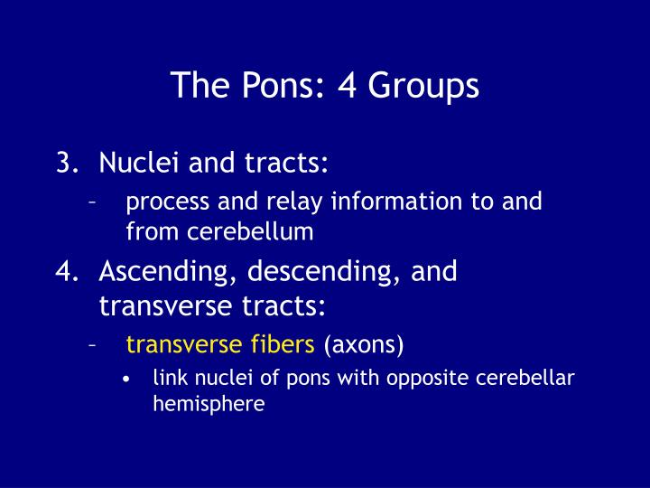 The Pons: 4 Groups