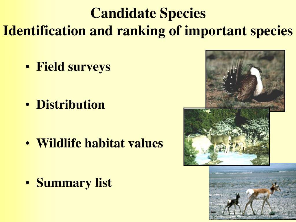 Candidate Species