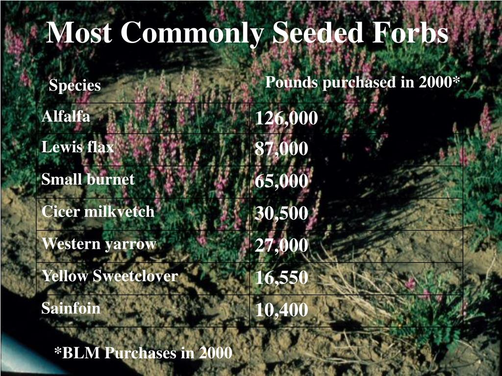 Most Commonly Seeded Forbs